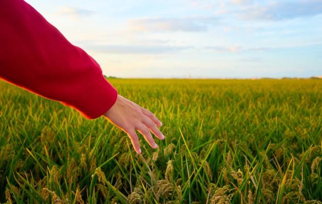organik tarım gübresi