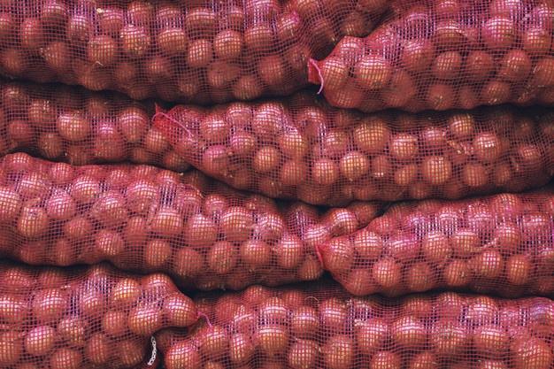 soğan tarımı