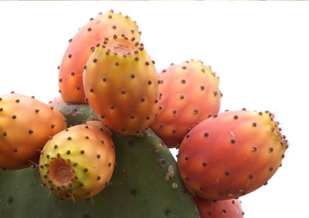 Hint İnciri, Prickly Pear